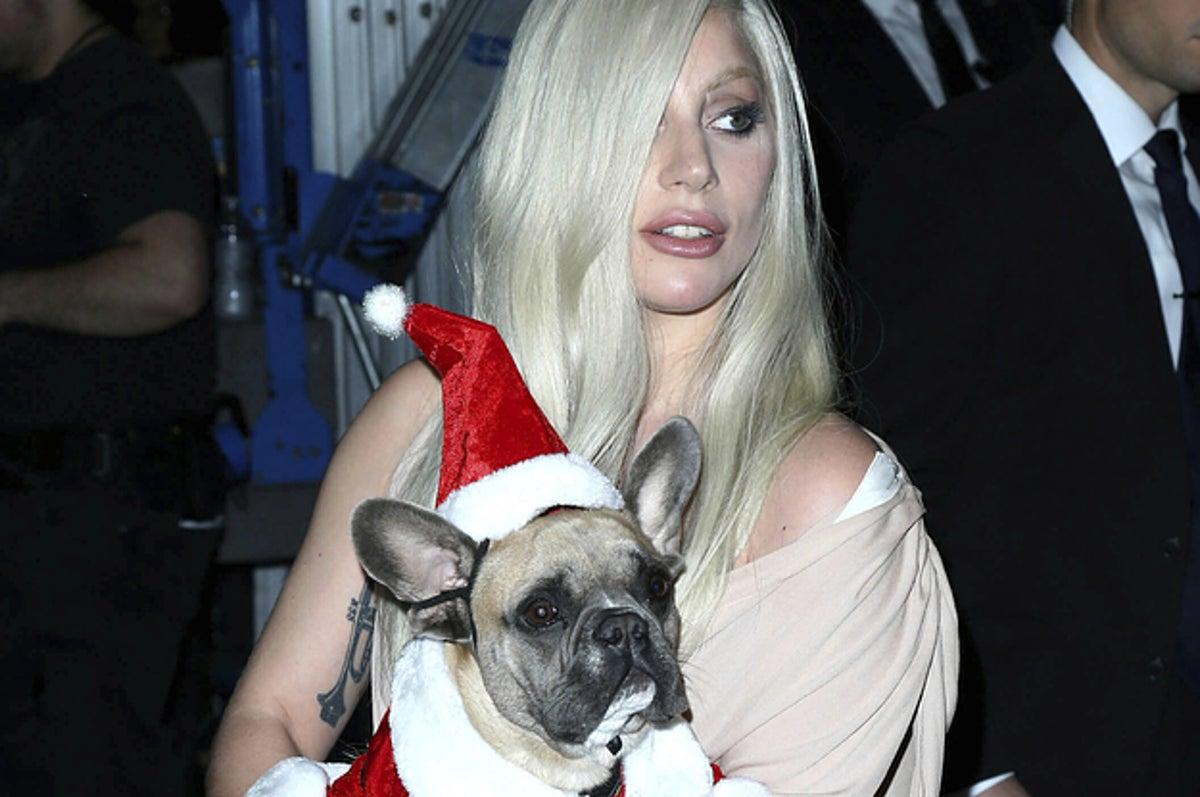 Lady Gaga's Dog Walker Shot, French Bulldogs Stolen