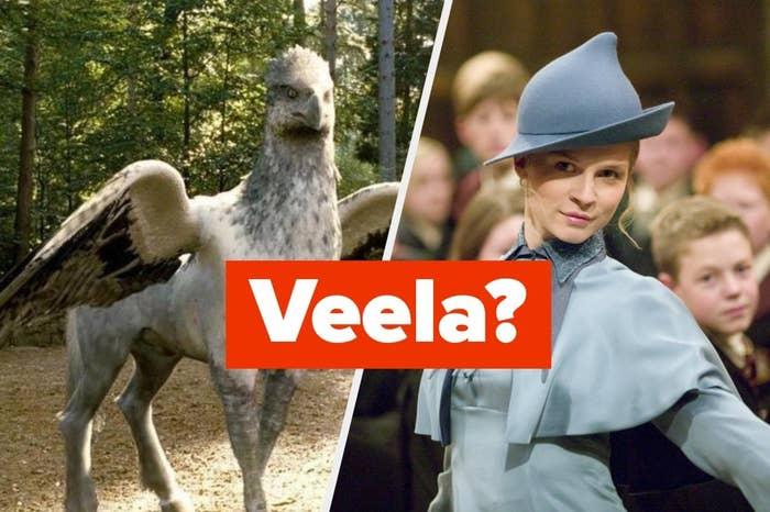 "Buckbeak and Fleur with the word ""Veela?"""