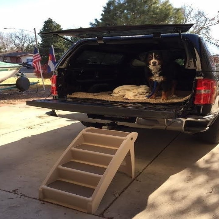 reviewer photo showing their dog in the back of their truck with the pet steps