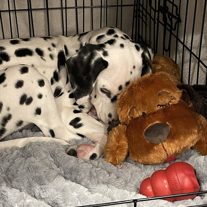 reviewer photo of Dalmatian puppy cuddling with the Snuggle Puppy