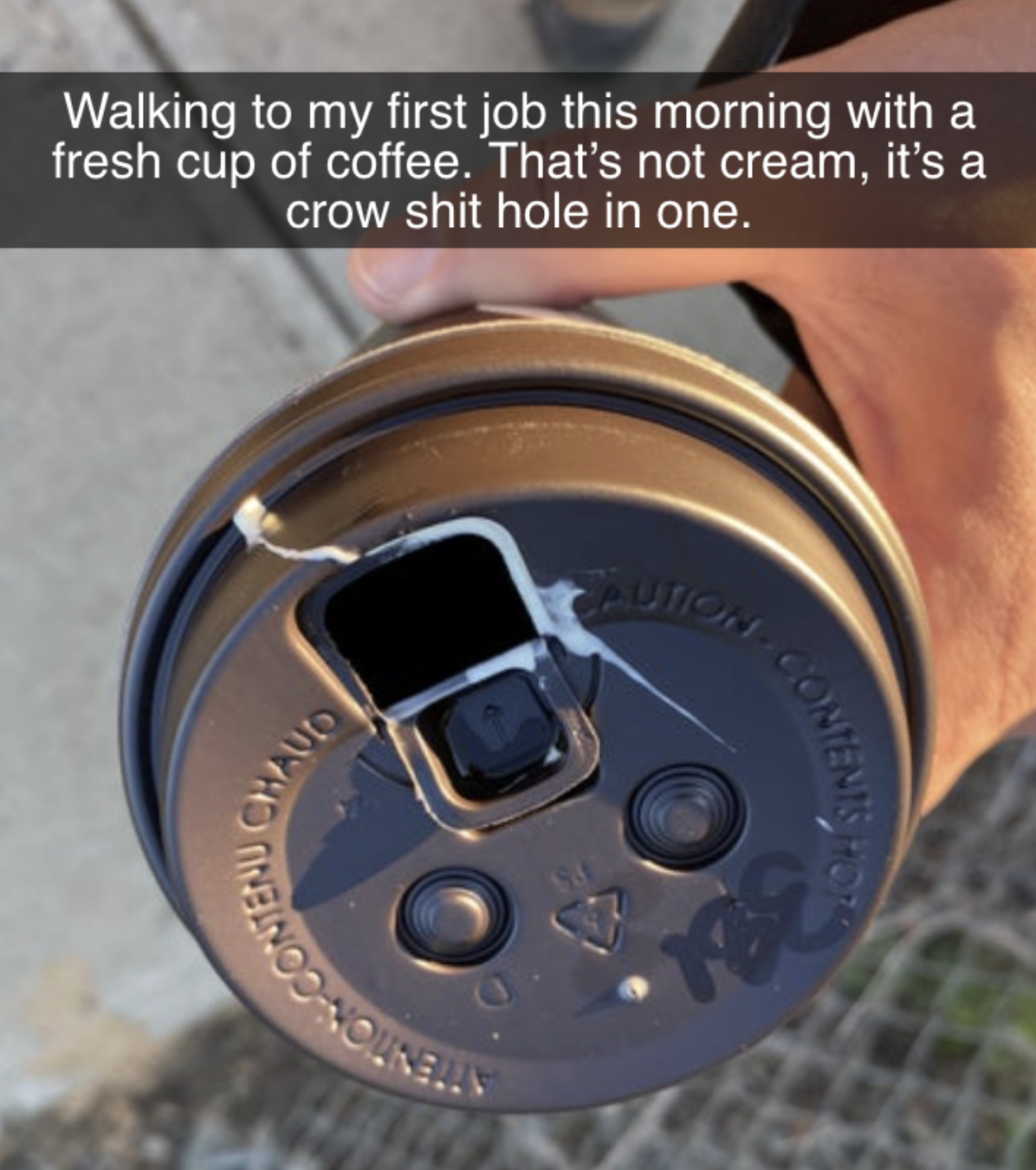a coffee cup a bird shit into