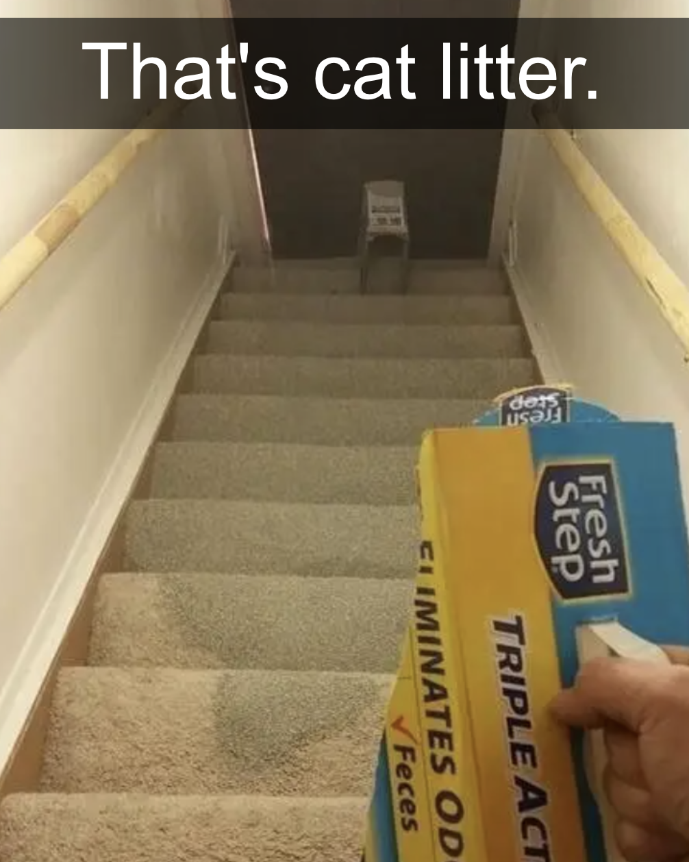 cat litter spilled all over a staircase