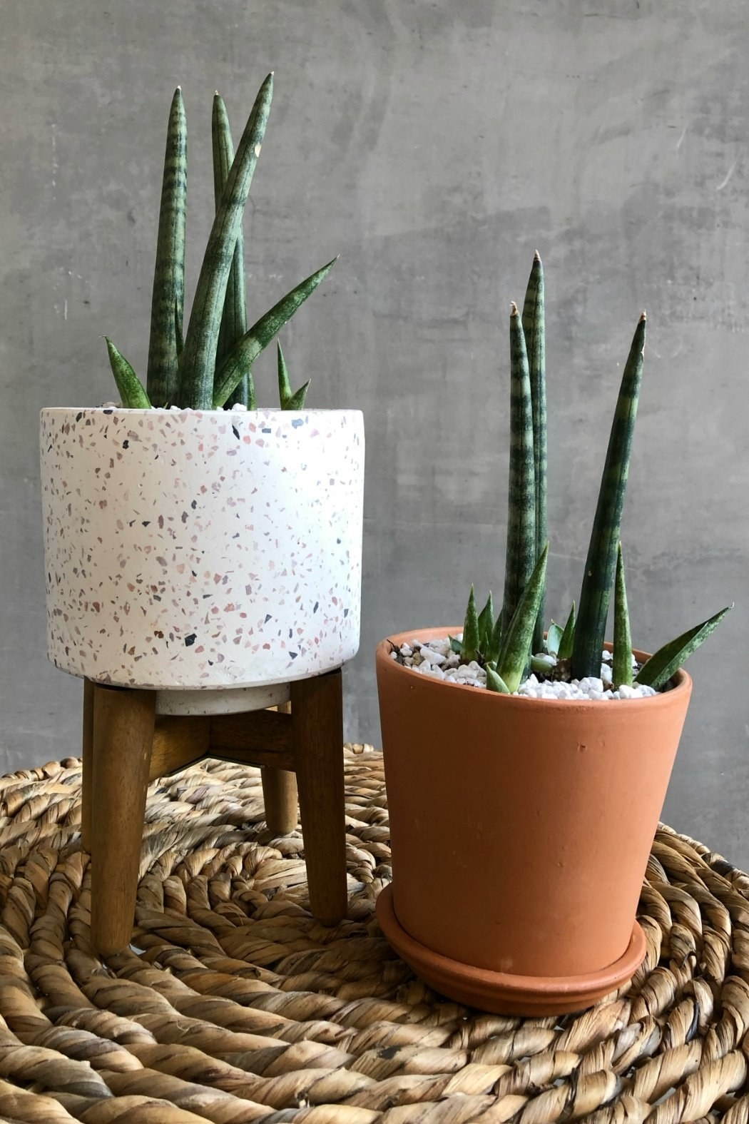 two snake plants, one in a terra-cotta pot and the other on a stand in a white speckled pot