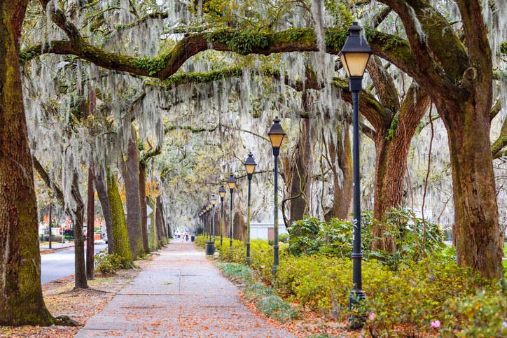 Georgia street lined with Spanish moss trees