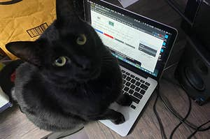 A beautiful, handsome black cat staring up while sitting on a laptop