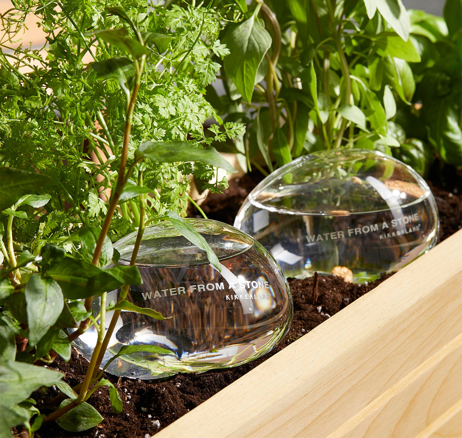 Two glass globes sitting in a bed of plants