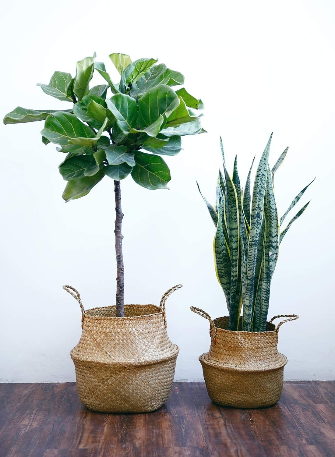 two basket planters holding different sized plants
