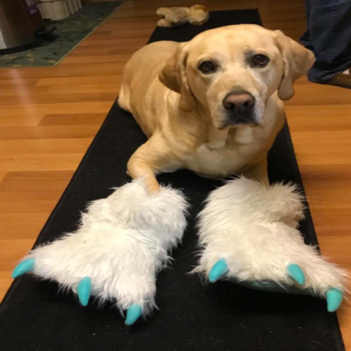 a reviewer photo of the slippers in white with blue claws on a yellow labs paws