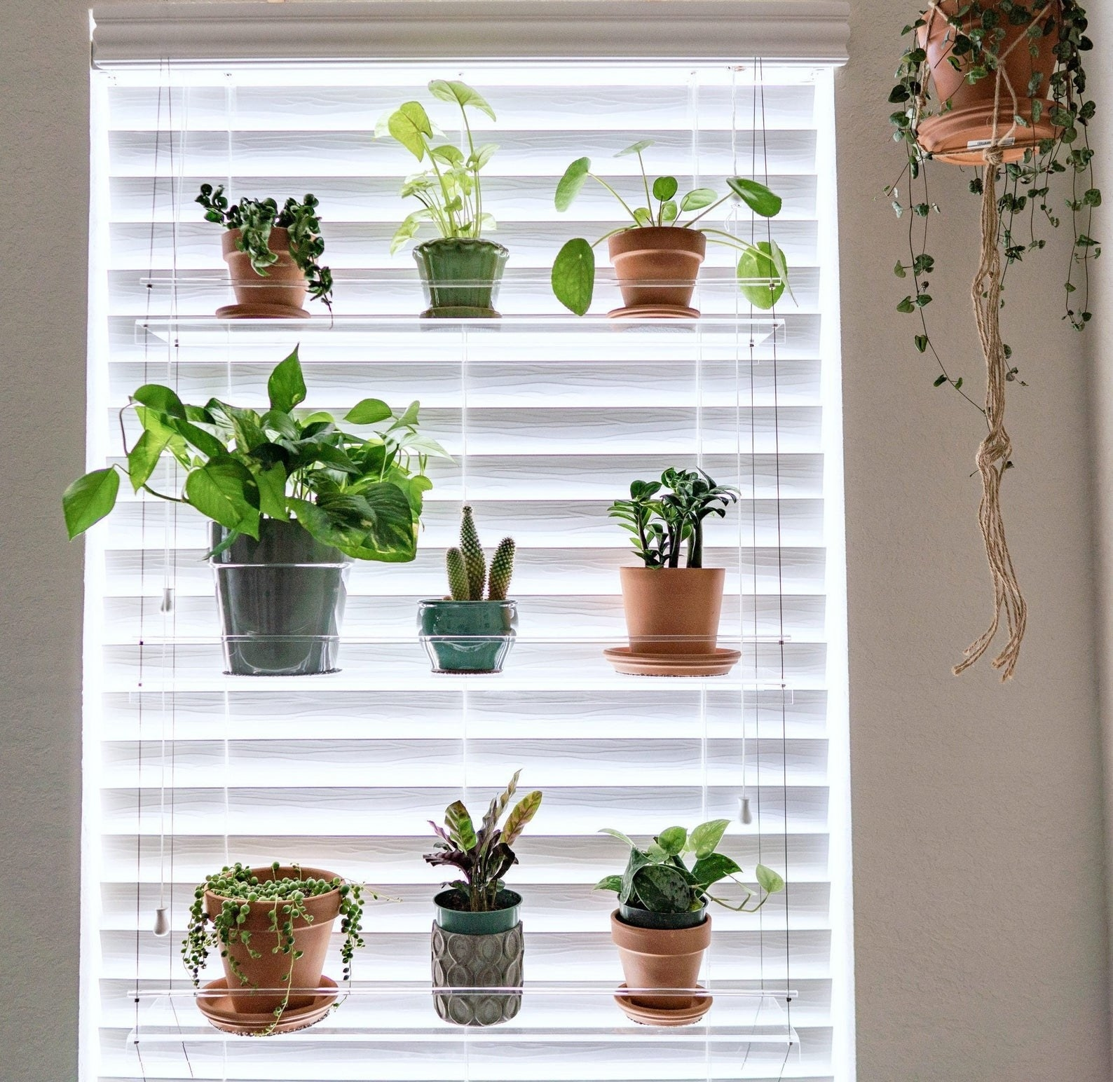 The three-tiered shelf holding nine plants