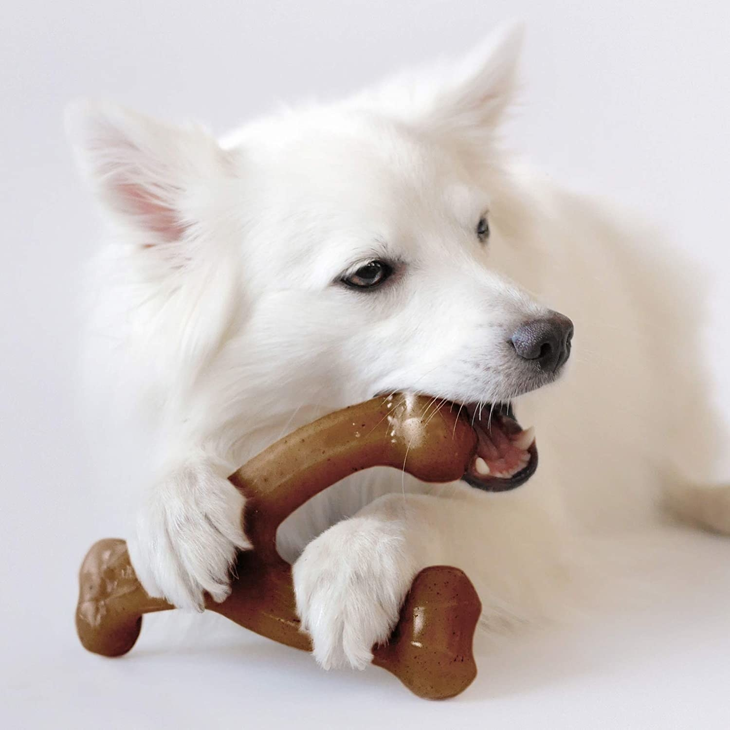 White dog chewing on the Y-shaped toy