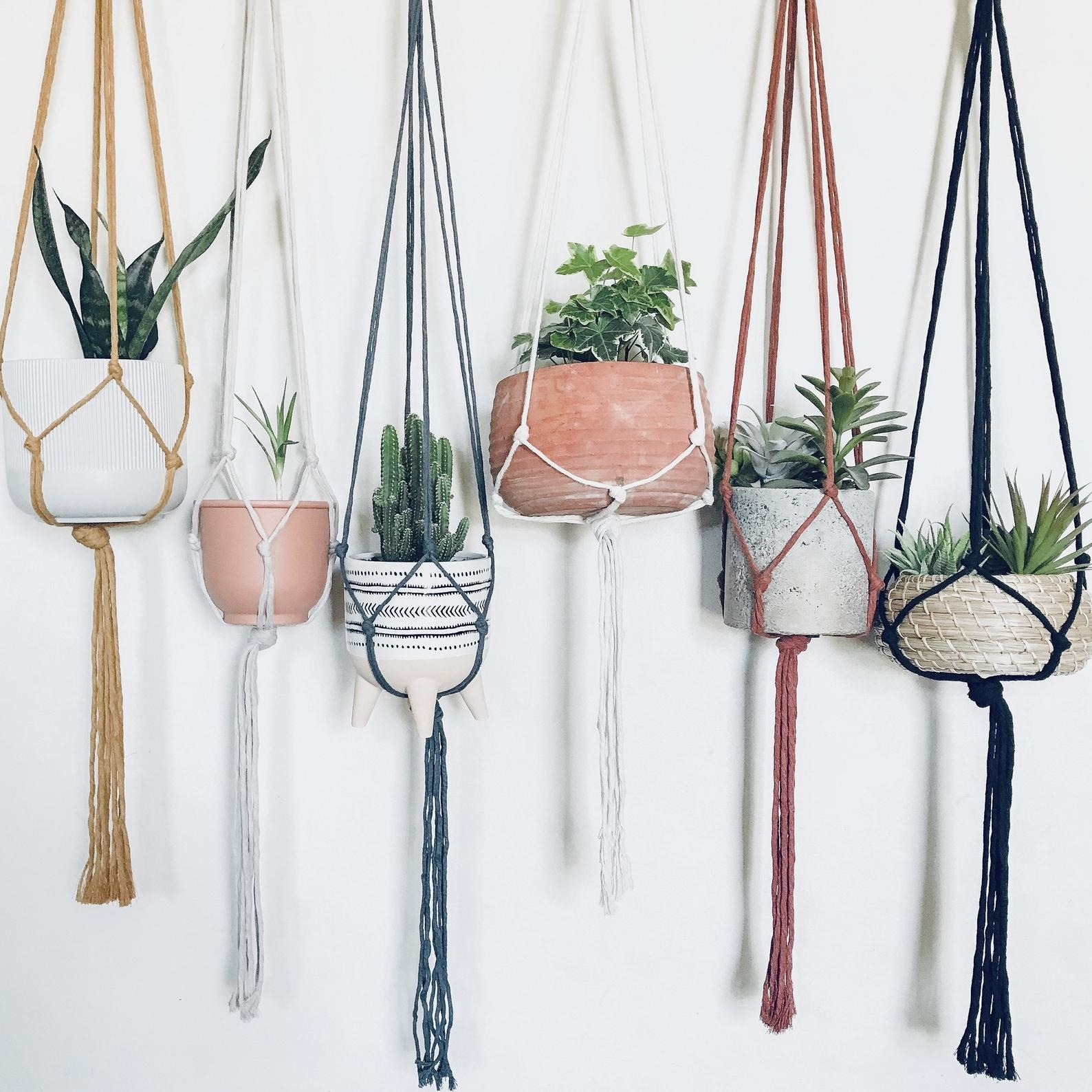 Six macrame hangers in different colors holding planters of different sizes