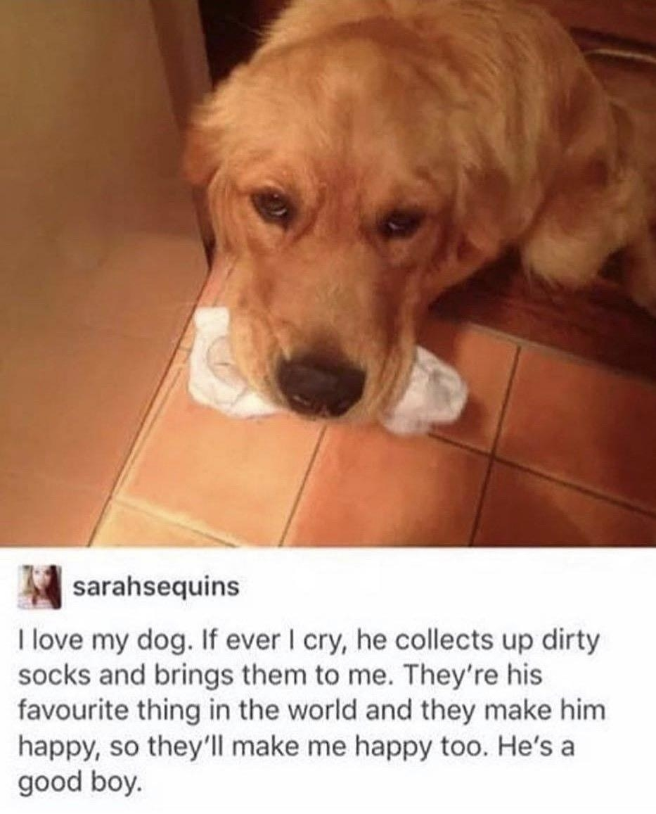 dog that brings socks to its owner when the owner is sad
