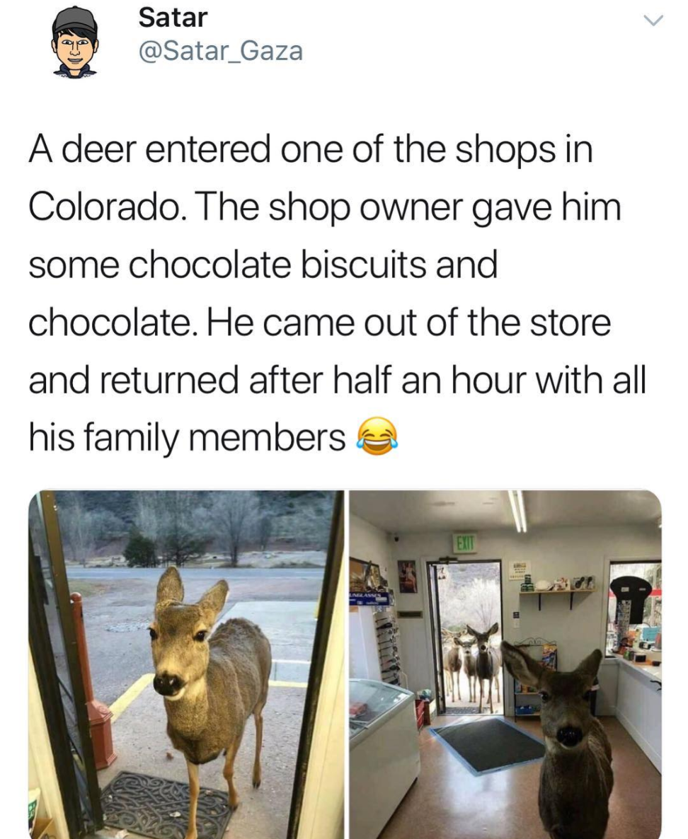 tweet about a person feeding a deer and then the deer brings back its family