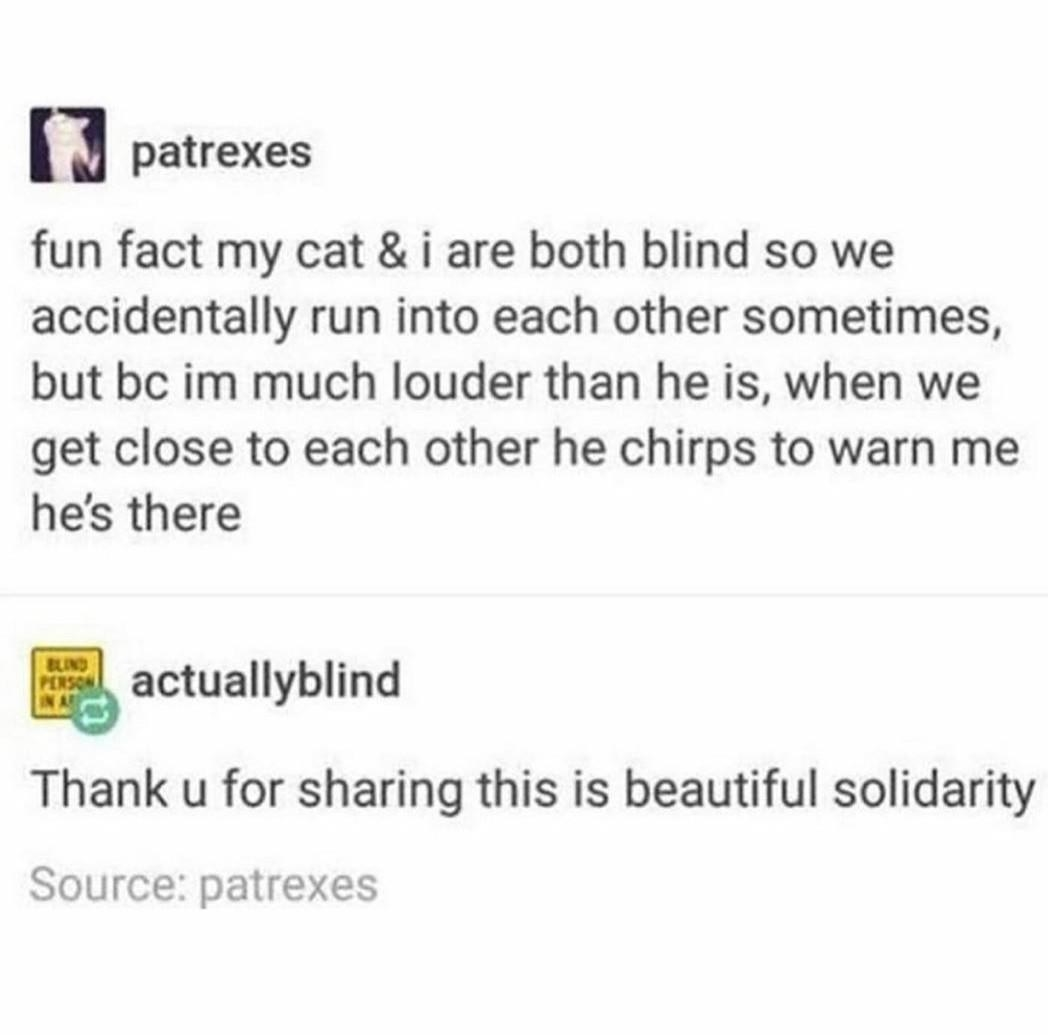 tumblr post reading fun fact my cat & i are both blind so we accidentally run into each other sometimes, but bc im much louder than he is, when we get close to each other he chirps to warn me he's there