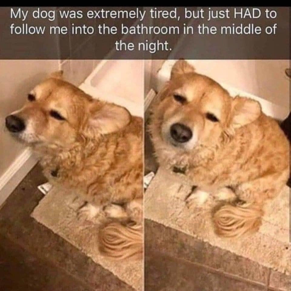 dog that follows its owner into the bathroom despite being tired