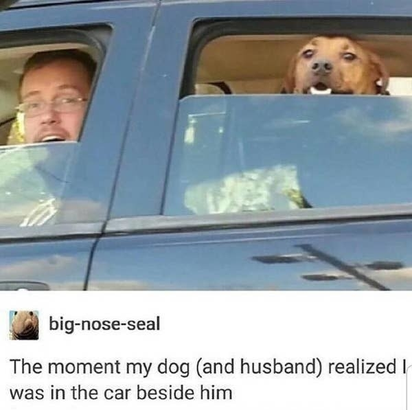 tumblr post reading the moment my dog and husband realized i was in the car beside him and they are smiling big
