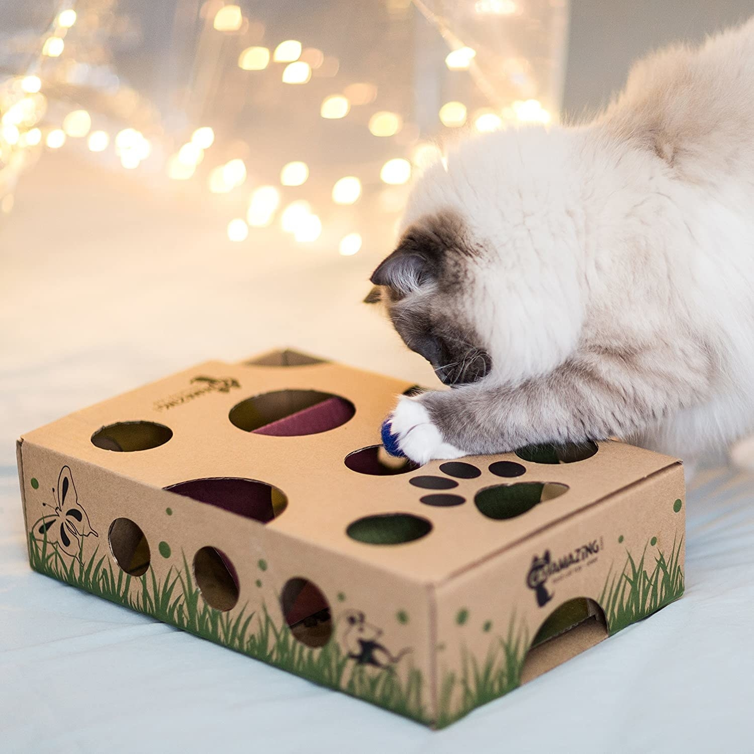 cat playing with a box with various holes cut into the surface
