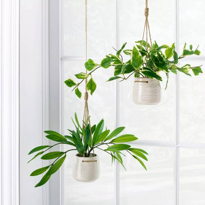A pair of the hanging plants in ceramic pots next to a window