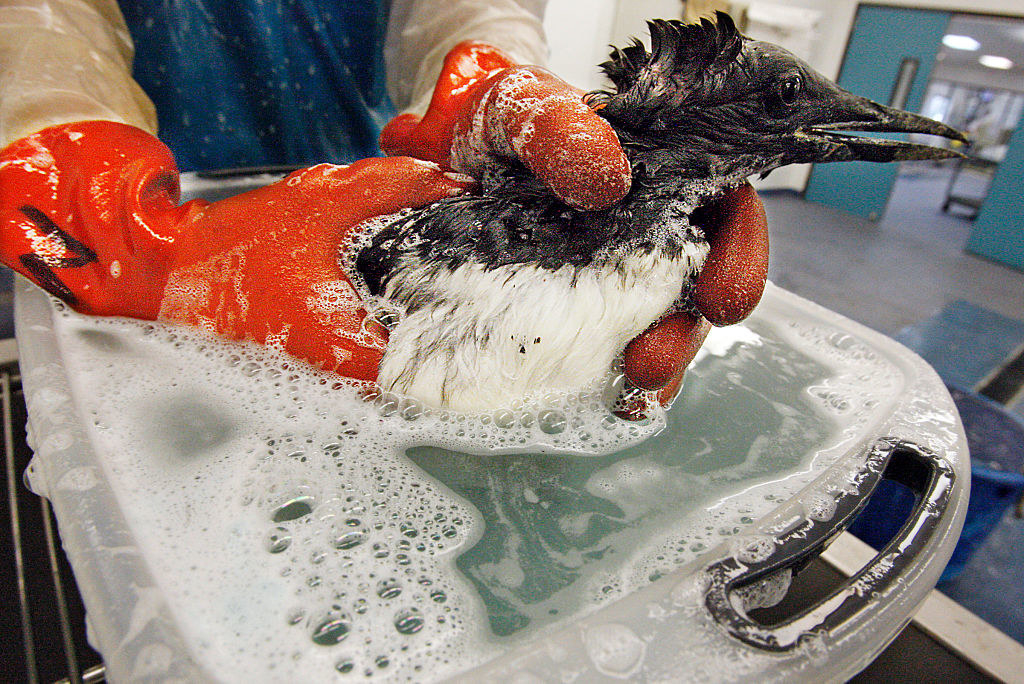 a bird being washed in soapy water