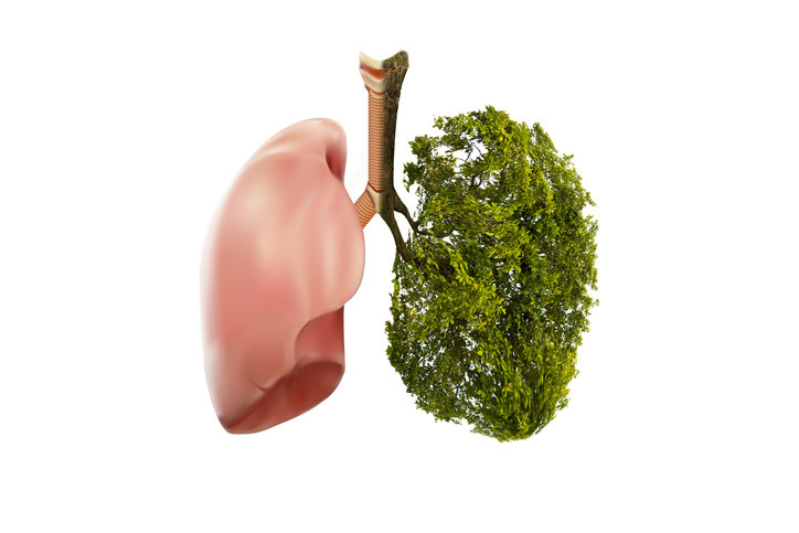 An image of lungs, but half looks like a lung and half looks like a tree