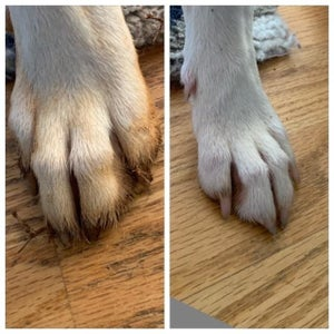 Reviewer's before and after showing the portable cleaner removed all the red clay on their white dog's paw