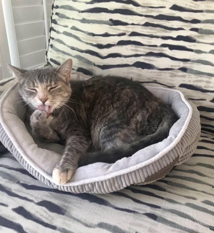 A cat licking their paw while laying in a cat bed