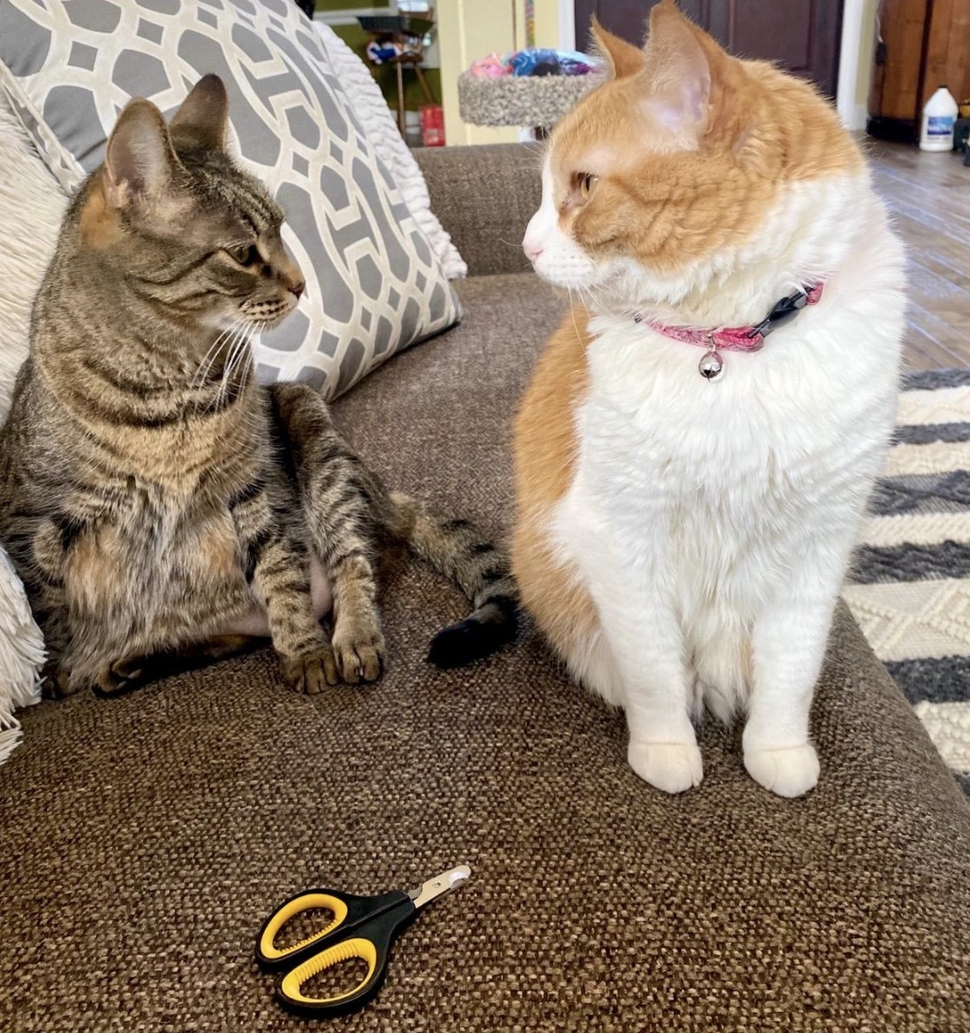Two cats standing next to nail clippers