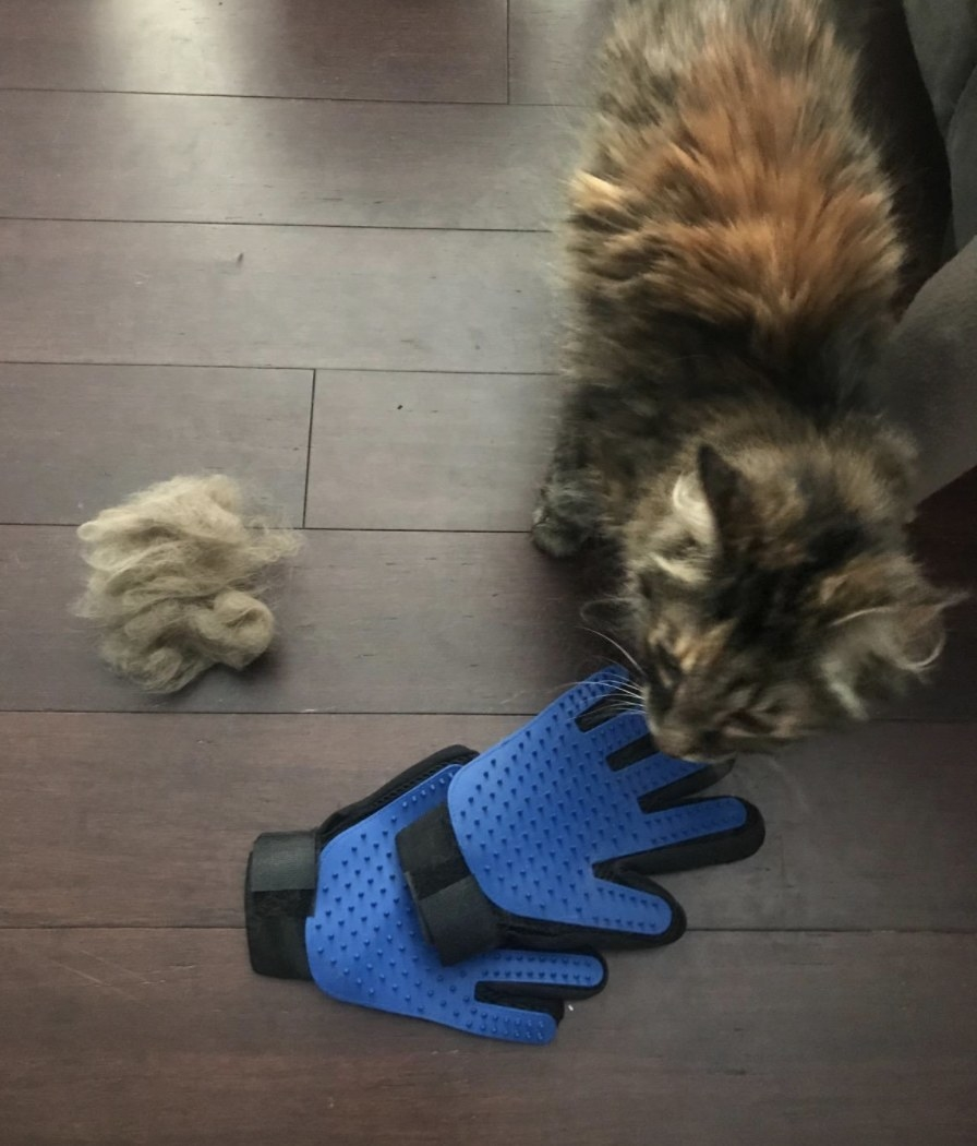 A cat next to grooming gloves and a pile of fur