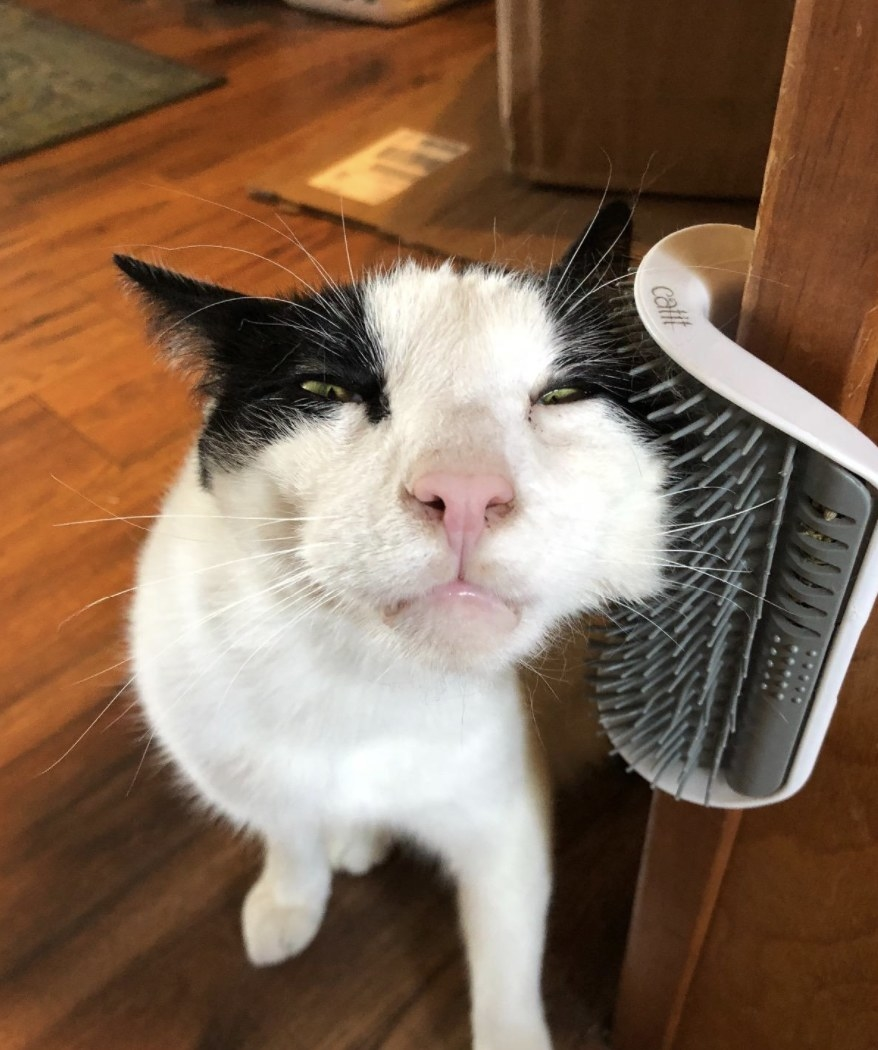 A cat rubbing their face on a mounted self groomer brush