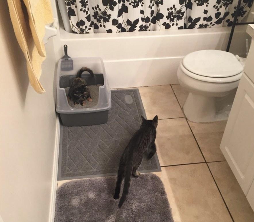 A cat walking on a litter mat