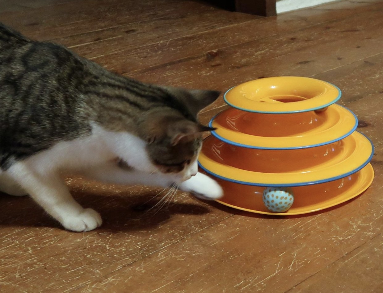 A cat playing with a tower track cat toy