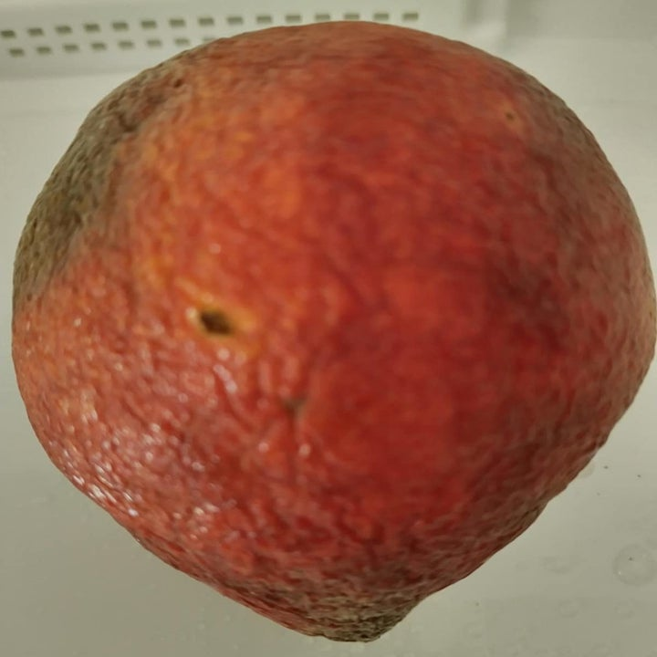 reviewer photo showing the peach they left out of the containers, looking old and rotted