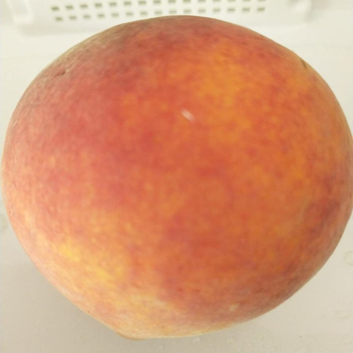 same reviewer showing the peach they did store in the container, still looking fresh and delicious