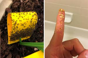 a plant insect trap and earwax removal drops