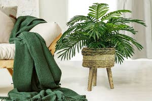 The palm plant in a basket stand