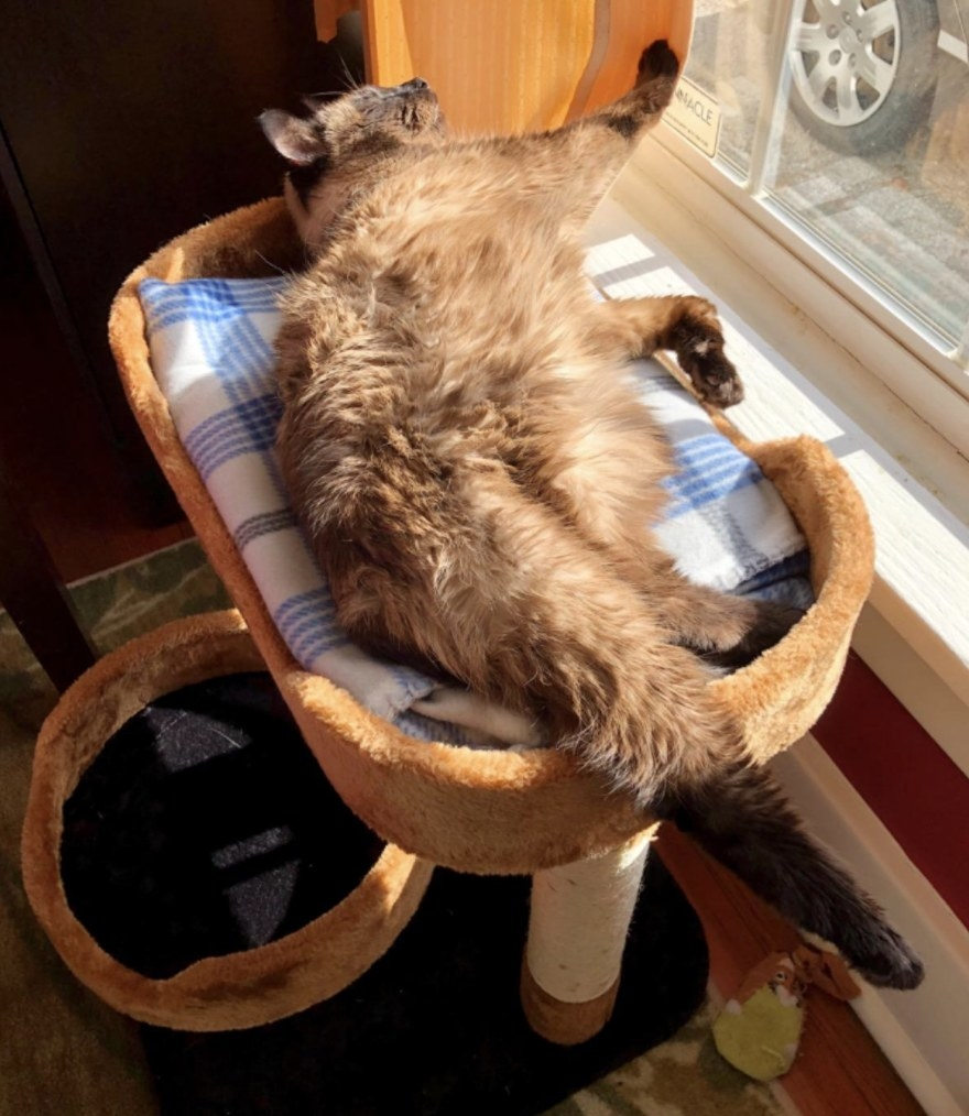 A cat napping on a cat tree
