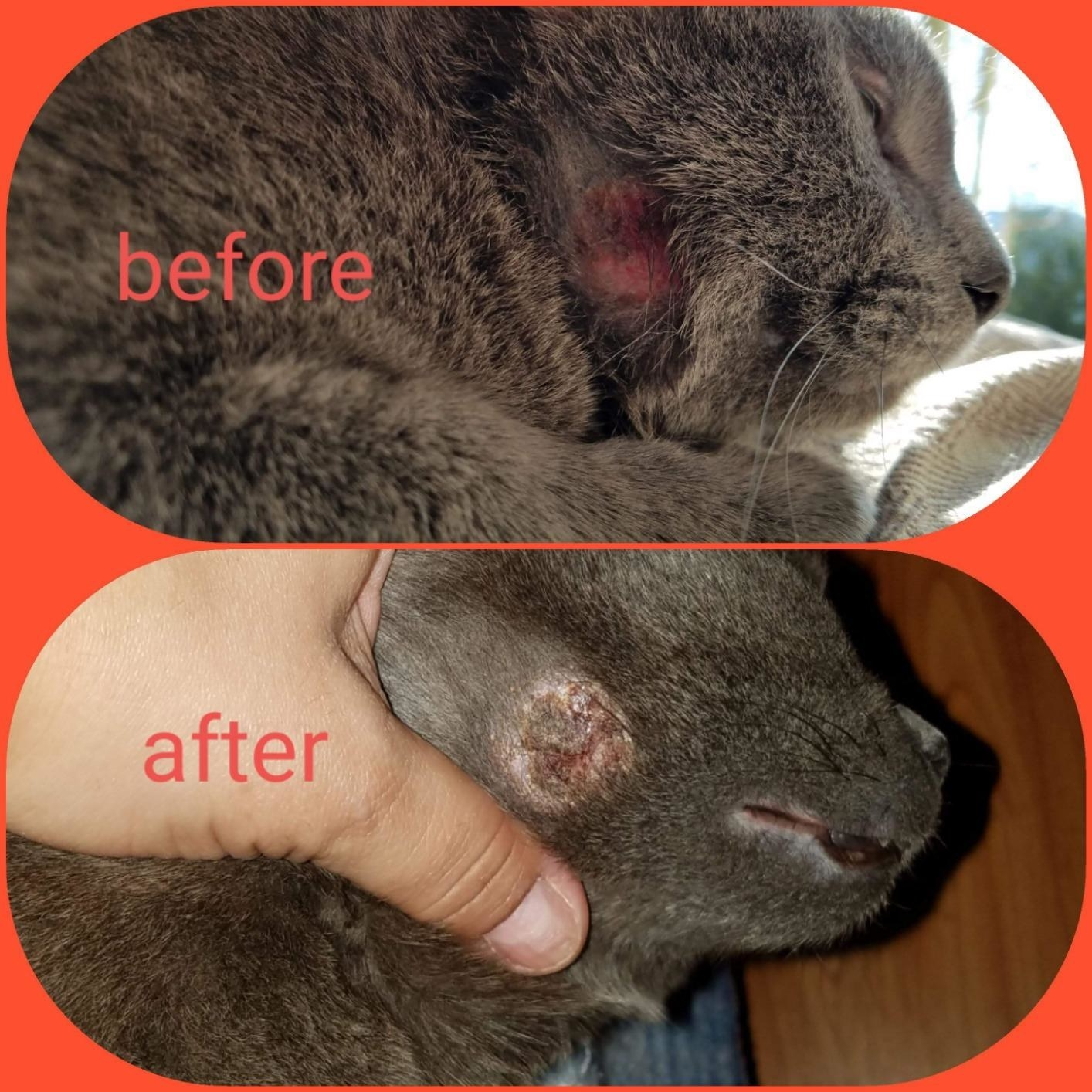 Review photo of cat before and after the spray