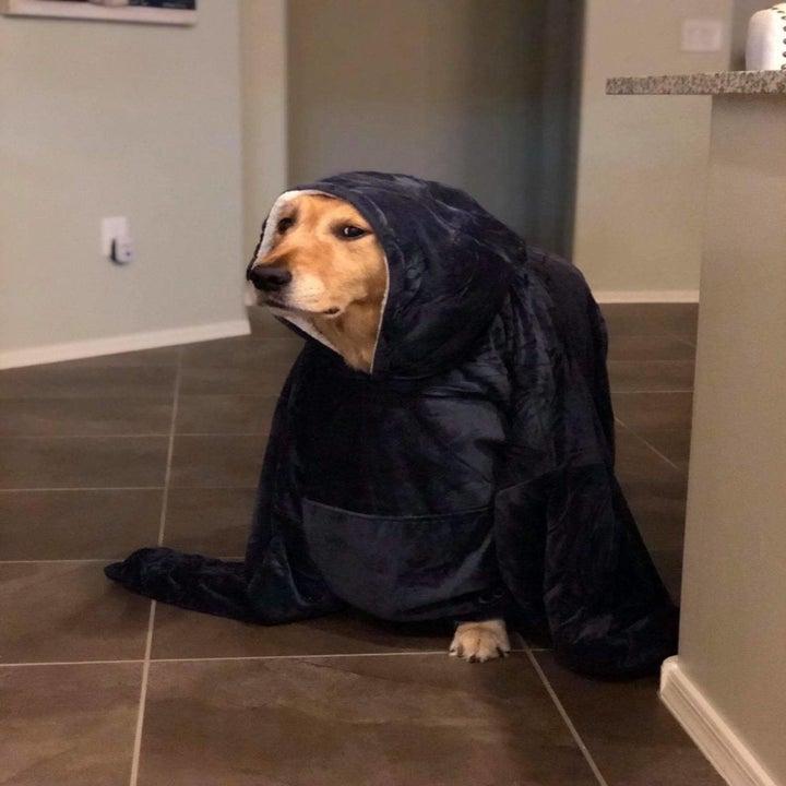 Dog wearing the hoodie