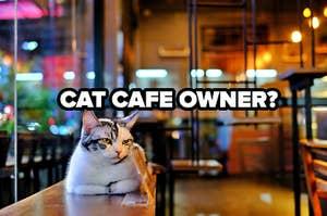 cat cafe owner