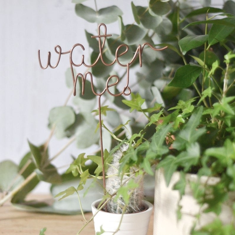A plant marker that says water me