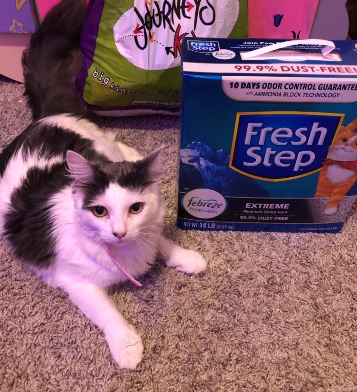 a reviewer's cat sitting in front of the box of cat litter