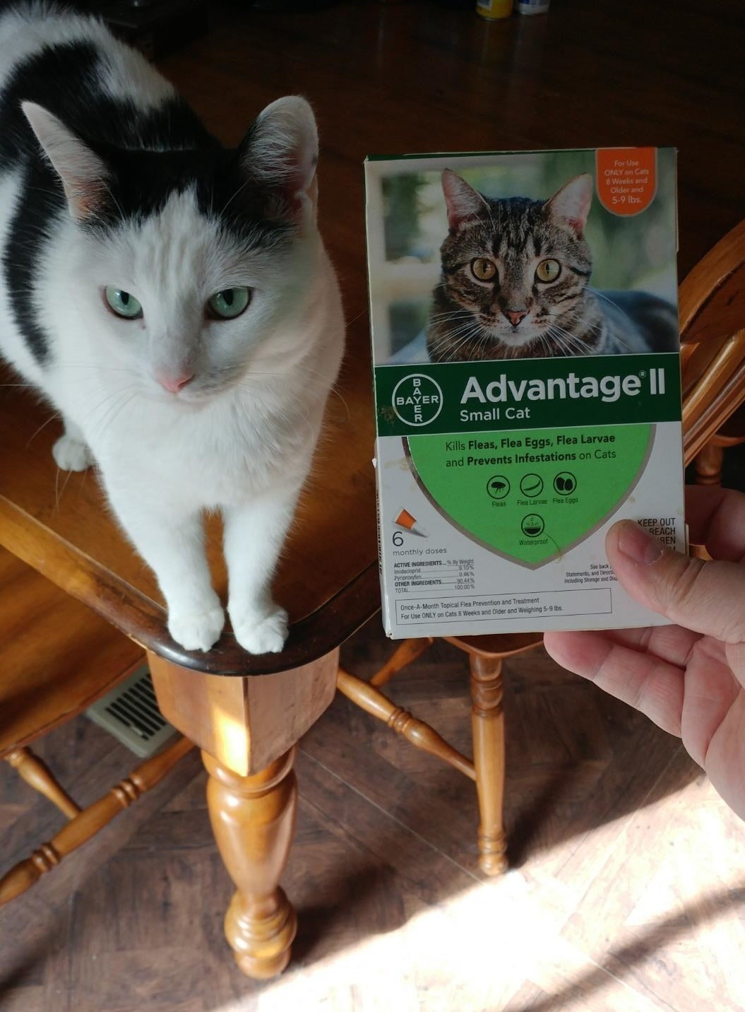 a reviewer's cat standing behind the flea treatment packaging