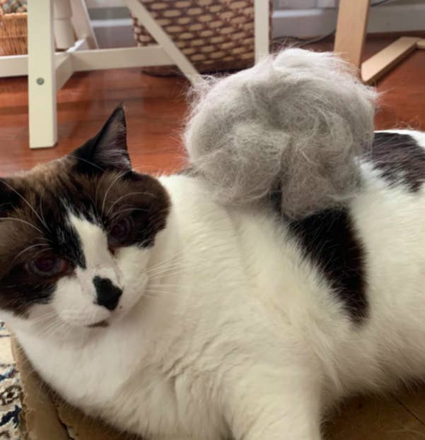 Cat next to large pile of their removed fur