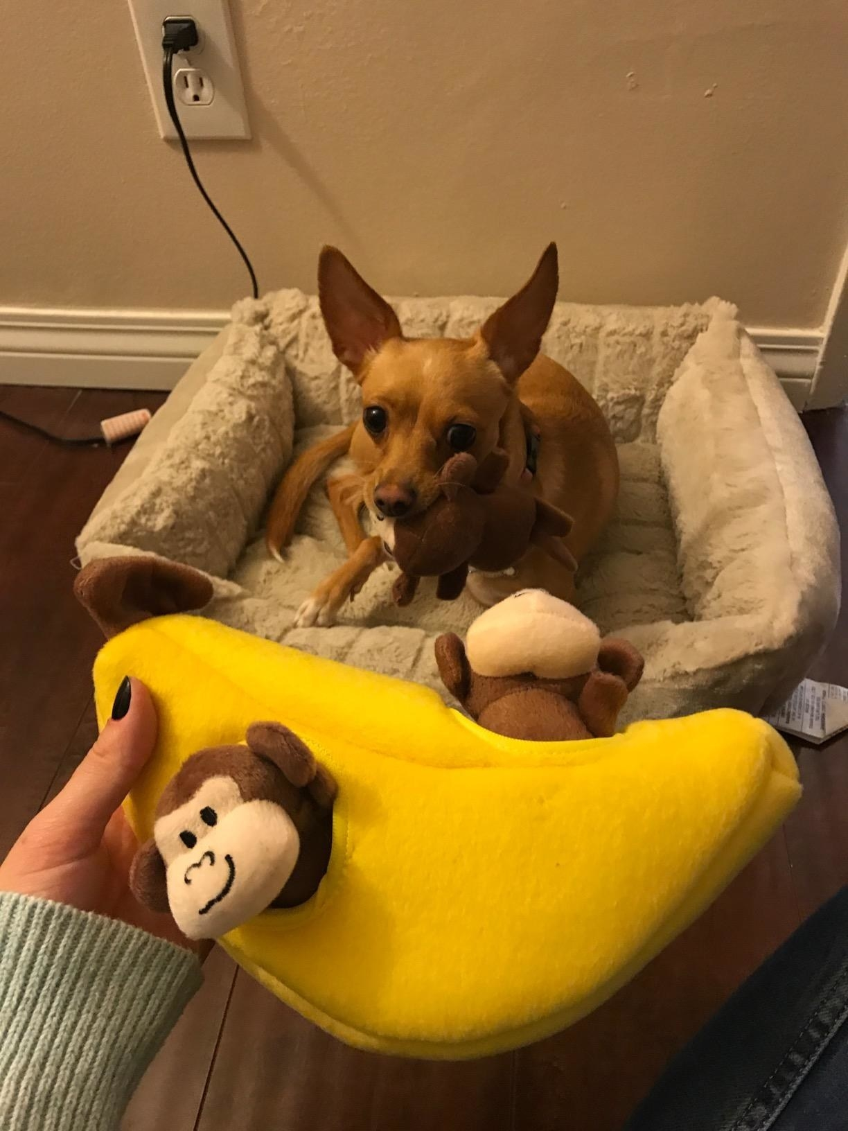 The toy in banana, which has several small, detachable monkeys sticking out of holes in the banana