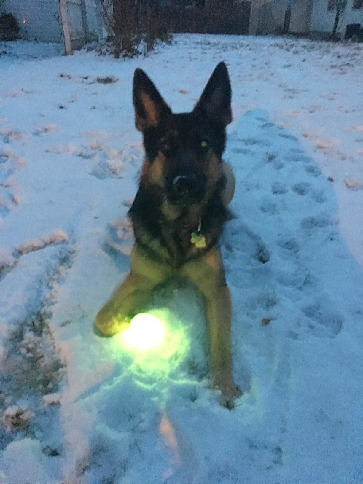 A dog plays with the ball, which lights up brightly—not a glow but actual light