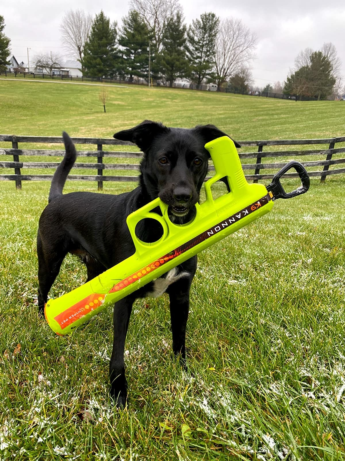 A dog holds the launcher, which looks like a Super Soaker-style large water gun