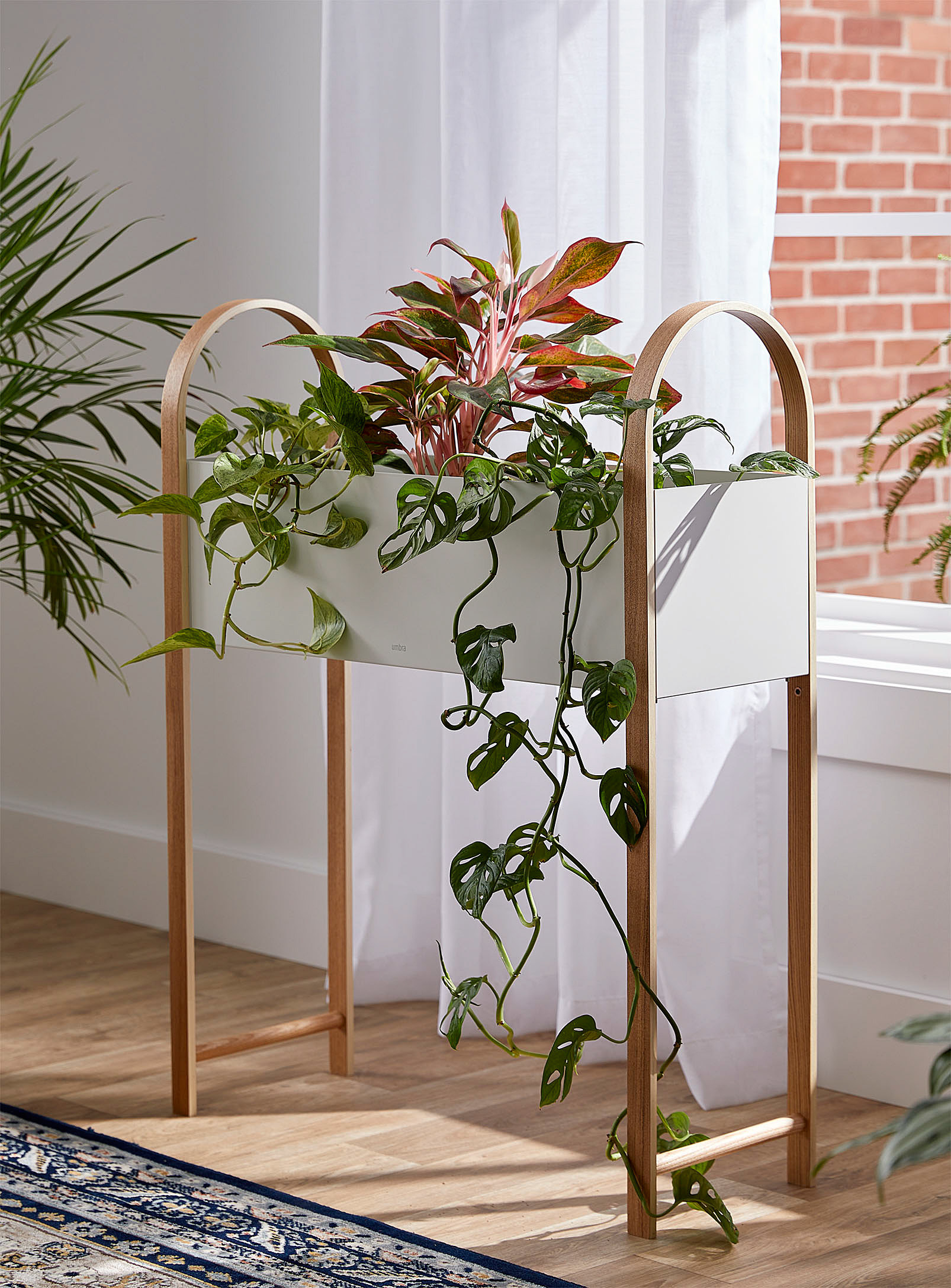 An oblong plant stand filled with leafy vines