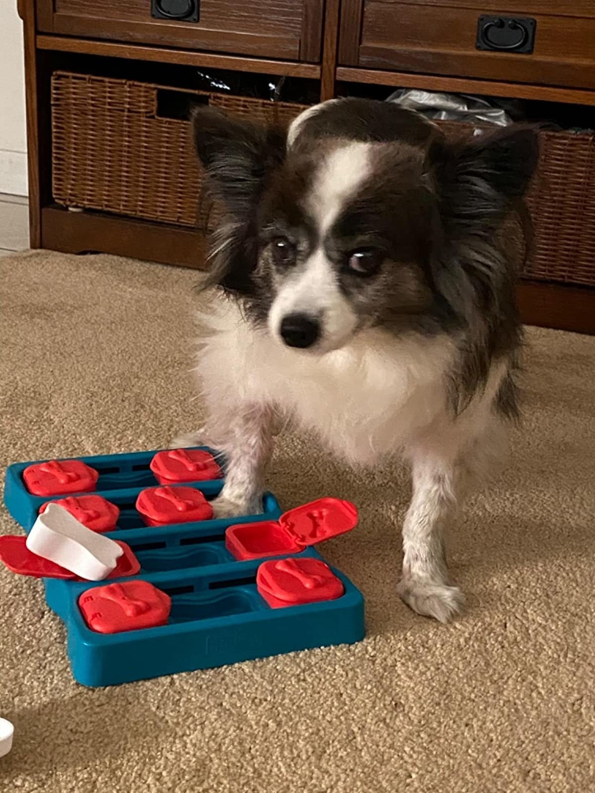 A small dog with the puzzle toy