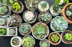 A bunch of different succulents spread out on a large table