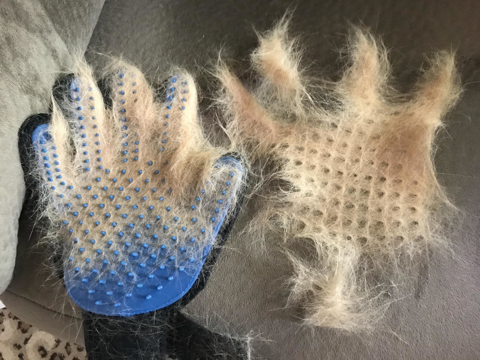A hair covered glove and a clump of hair removed from a glove